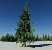 forest fir trees 3d model