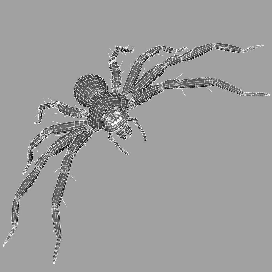 Lycosa Tarantula 'Wolf Spider' royalty-free 3d model - Preview no. 9