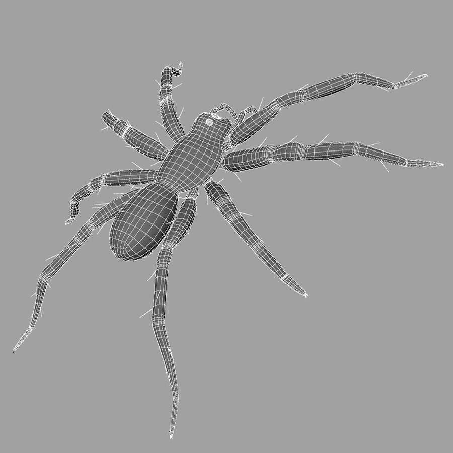 Lycosa Tarantula 'Wolf Spider' royalty-free 3d model - Preview no. 10