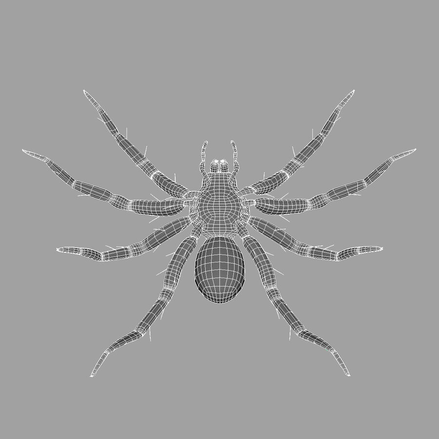 Lycosa Tarantula 'Wolf Spider' royalty-free 3d model - Preview no. 11