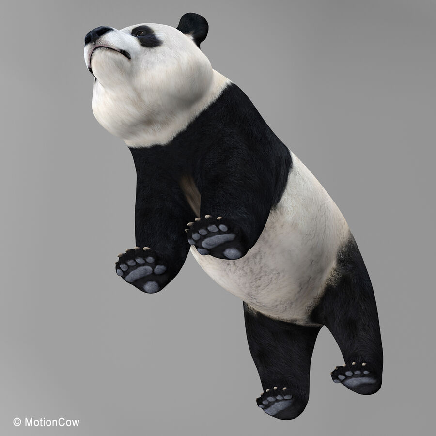 Urso panda royalty-free 3d model - Preview no. 15