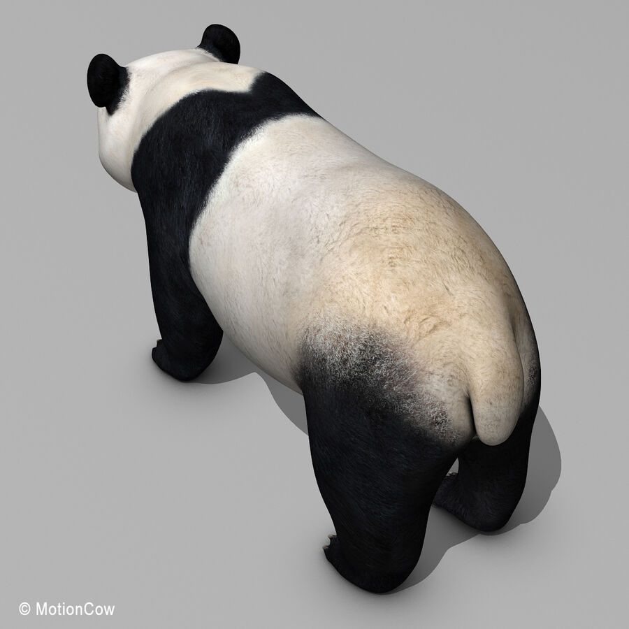 Urso panda royalty-free 3d model - Preview no. 13