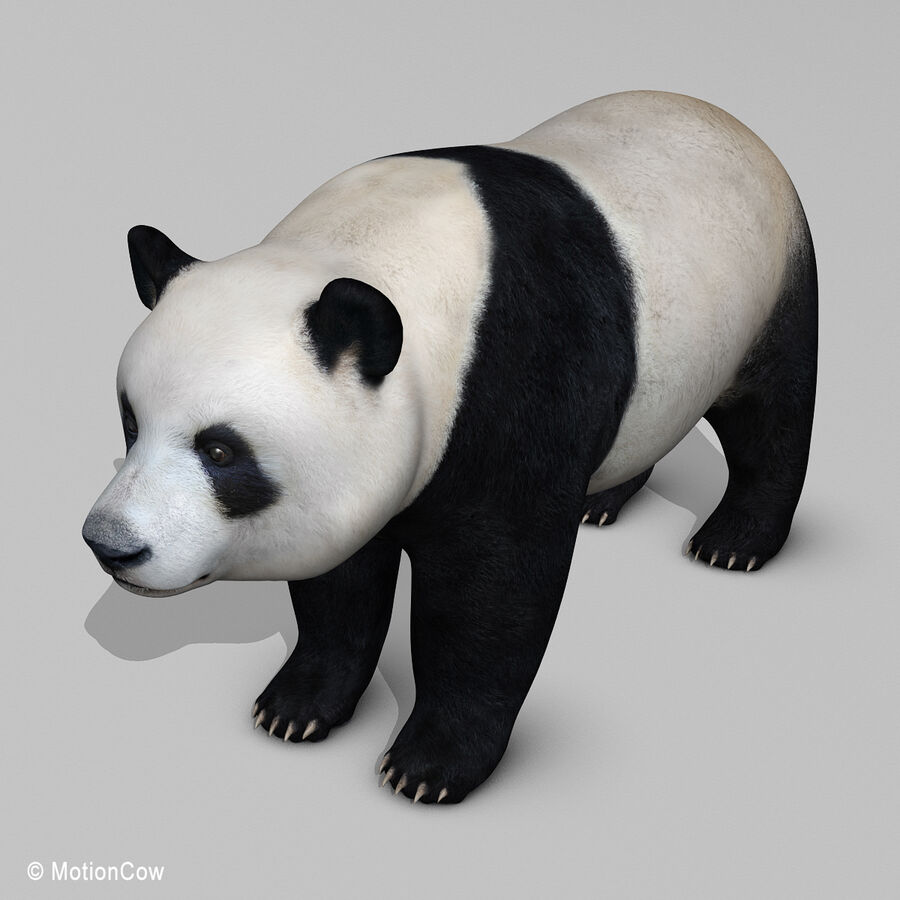 Urso panda royalty-free 3d model - Preview no. 14