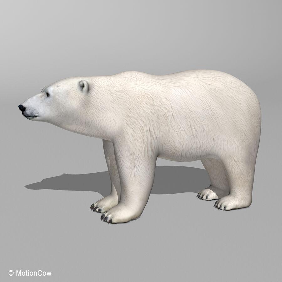 Urso polar royalty-free 3d model - Preview no. 6