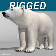 Niedźwiedź polarny 3d model