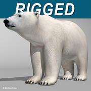 Orso polare 3d model
