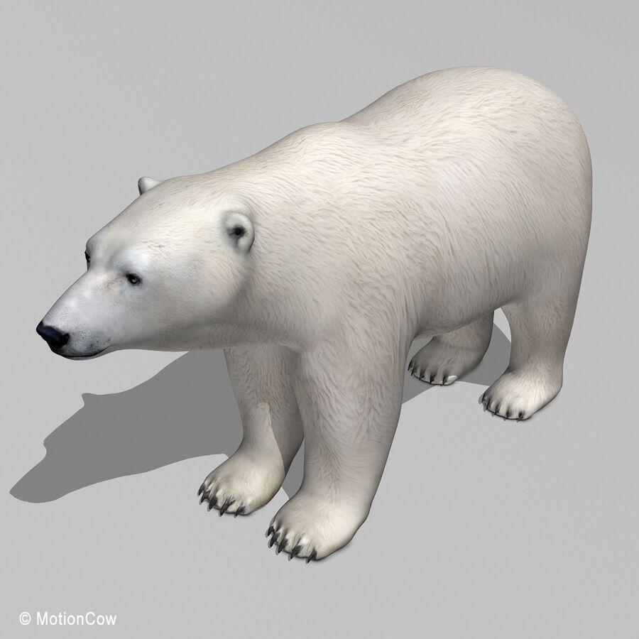 Urso polar royalty-free 3d model - Preview no. 12