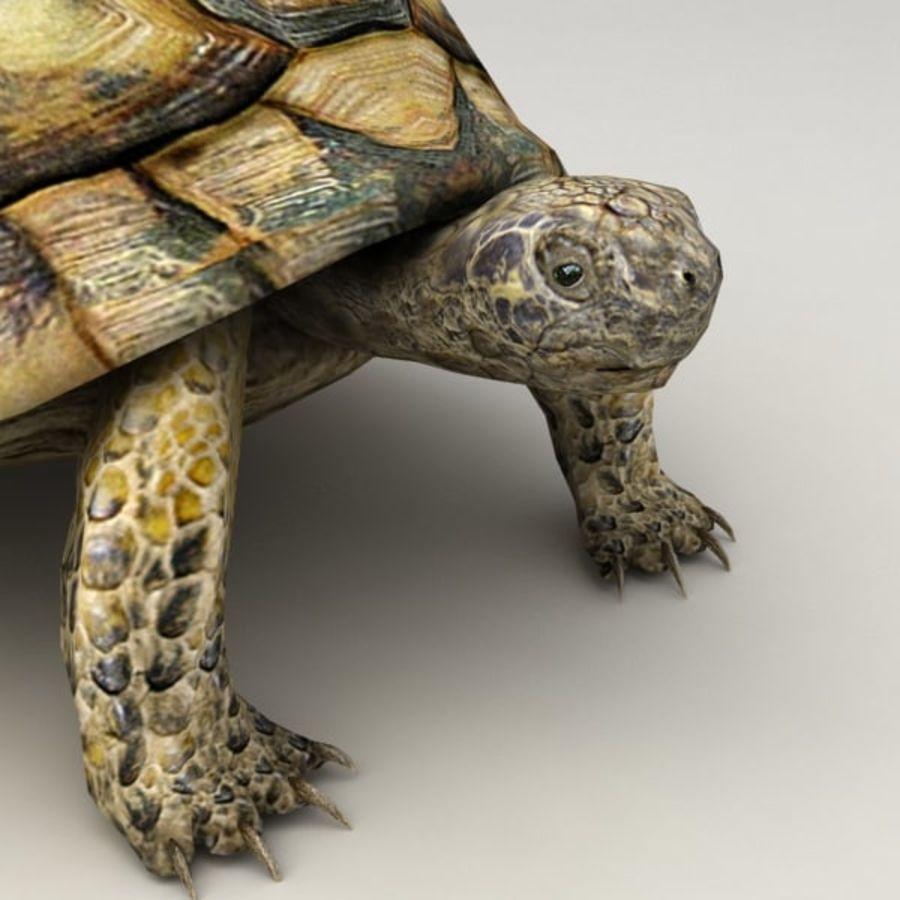 Черепаха сфальсифицирована royalty-free 3d model - Preview no. 7