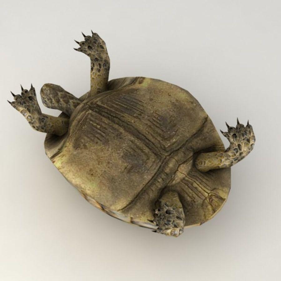 Черепаха сфальсифицирована royalty-free 3d model - Preview no. 6