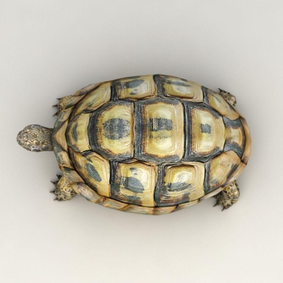 Tortuga aparejada royalty-free modelo 3d - Preview no. 5