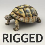 Черепаха сфальсифицирована 3d model