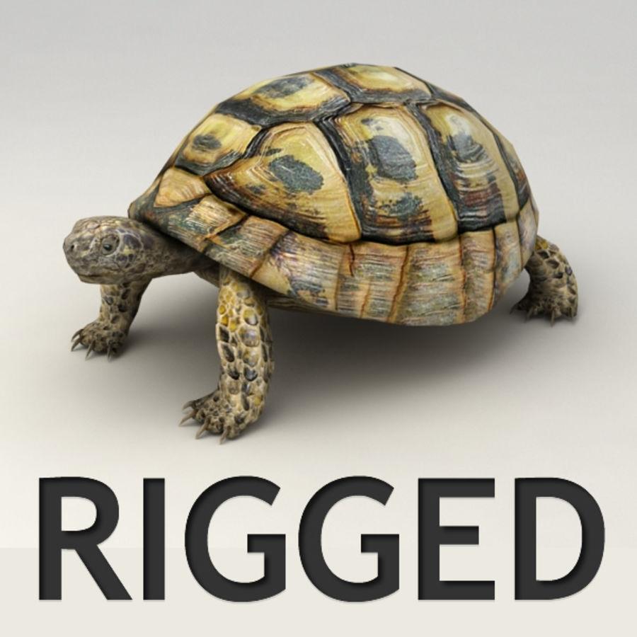 Tortuga aparejada royalty-free modelo 3d - Preview no. 1