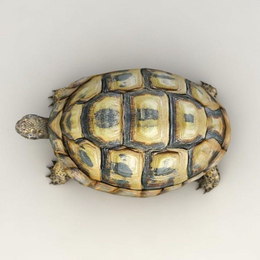 Черепаха сфальсифицирована royalty-free 3d model - Preview no. 5