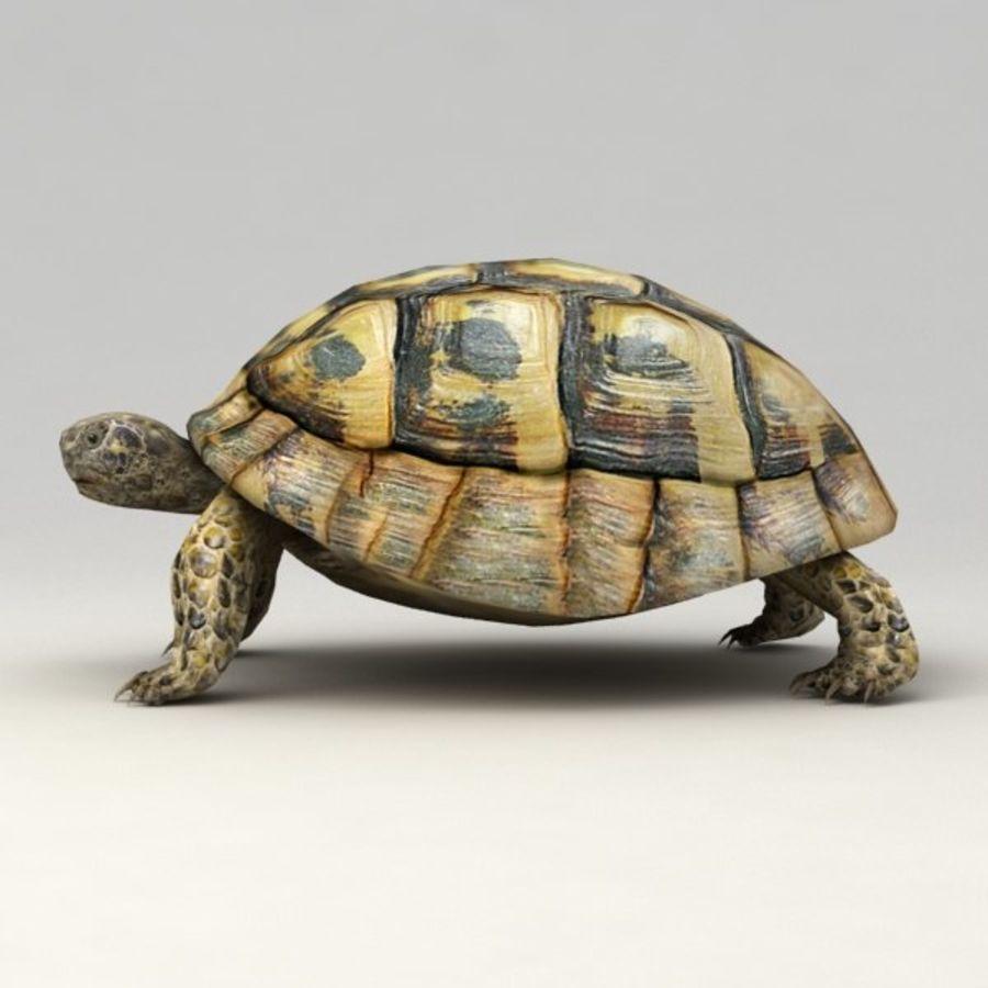Черепаха сфальсифицирована royalty-free 3d model - Preview no. 4