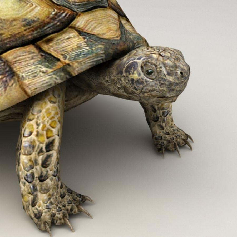 Tortuga aparejada royalty-free modelo 3d - Preview no. 7