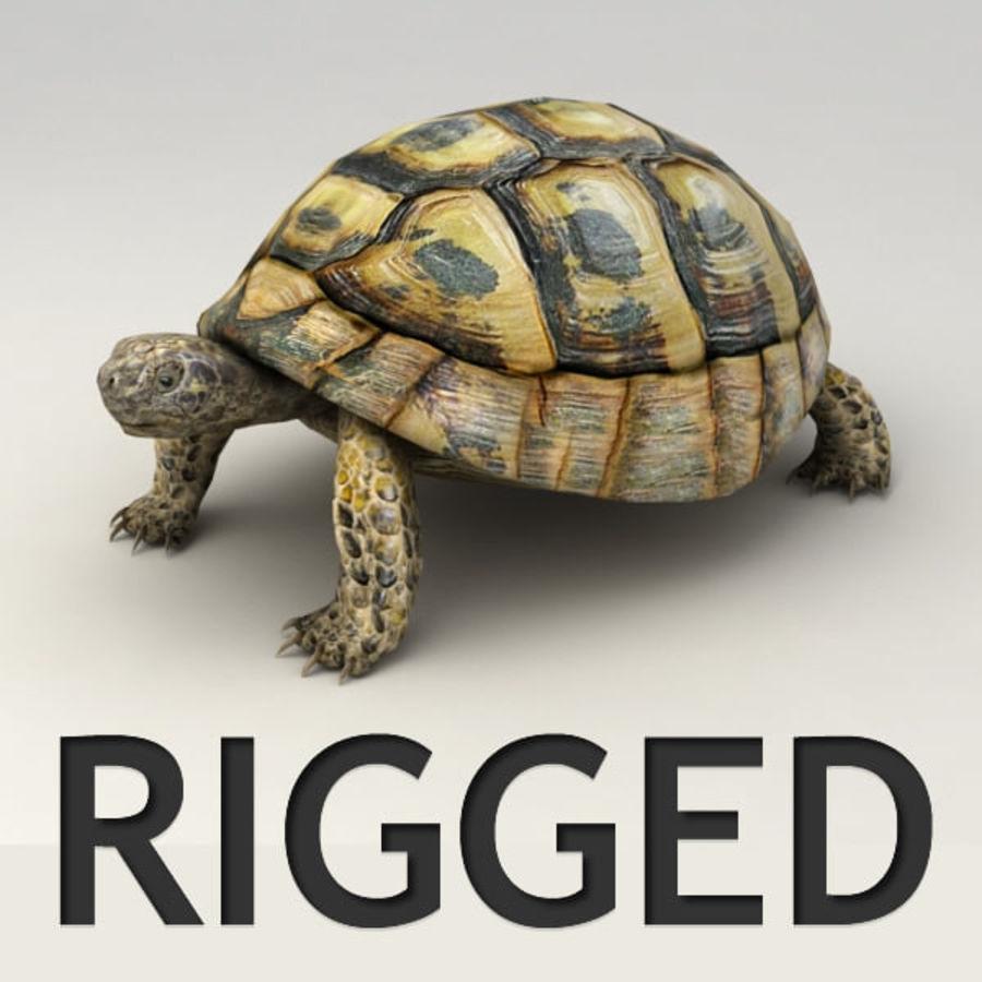 Черепаха сфальсифицирована royalty-free 3d model - Preview no. 1
