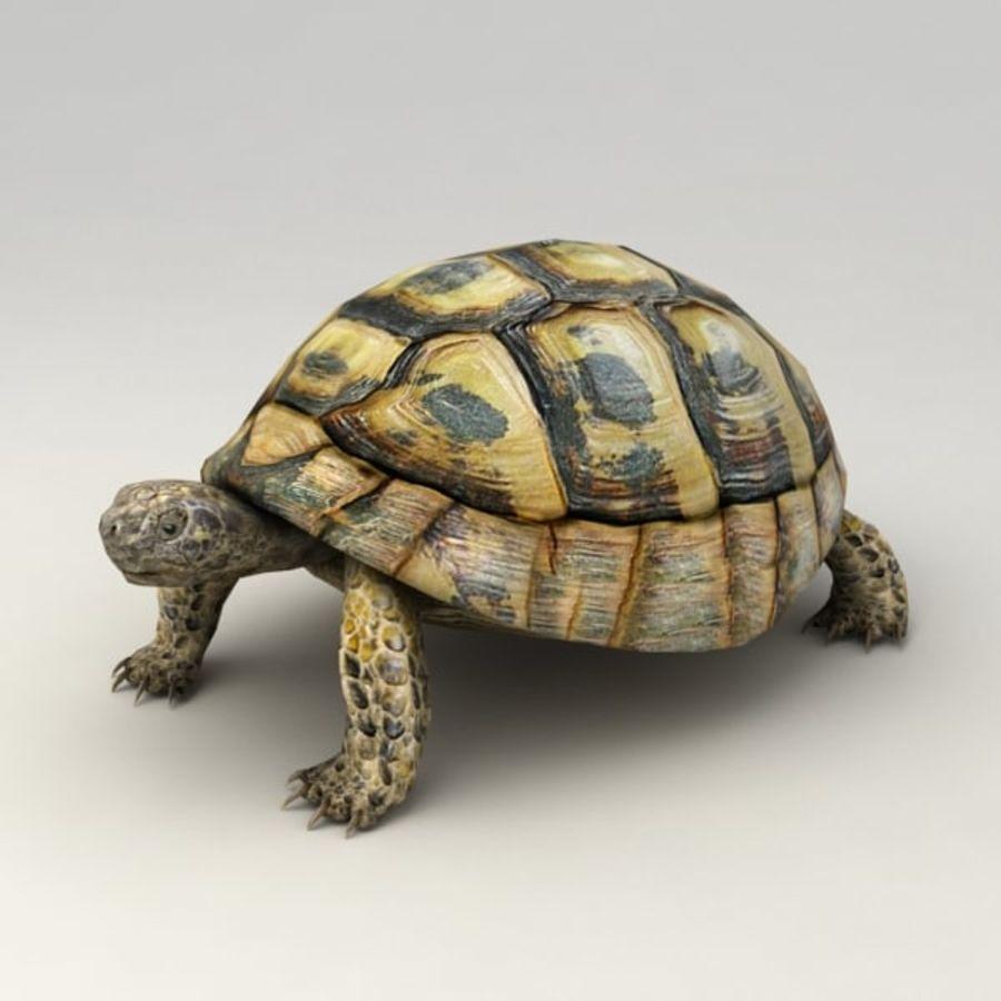 Черепаха сфальсифицирована royalty-free 3d model - Preview no. 2