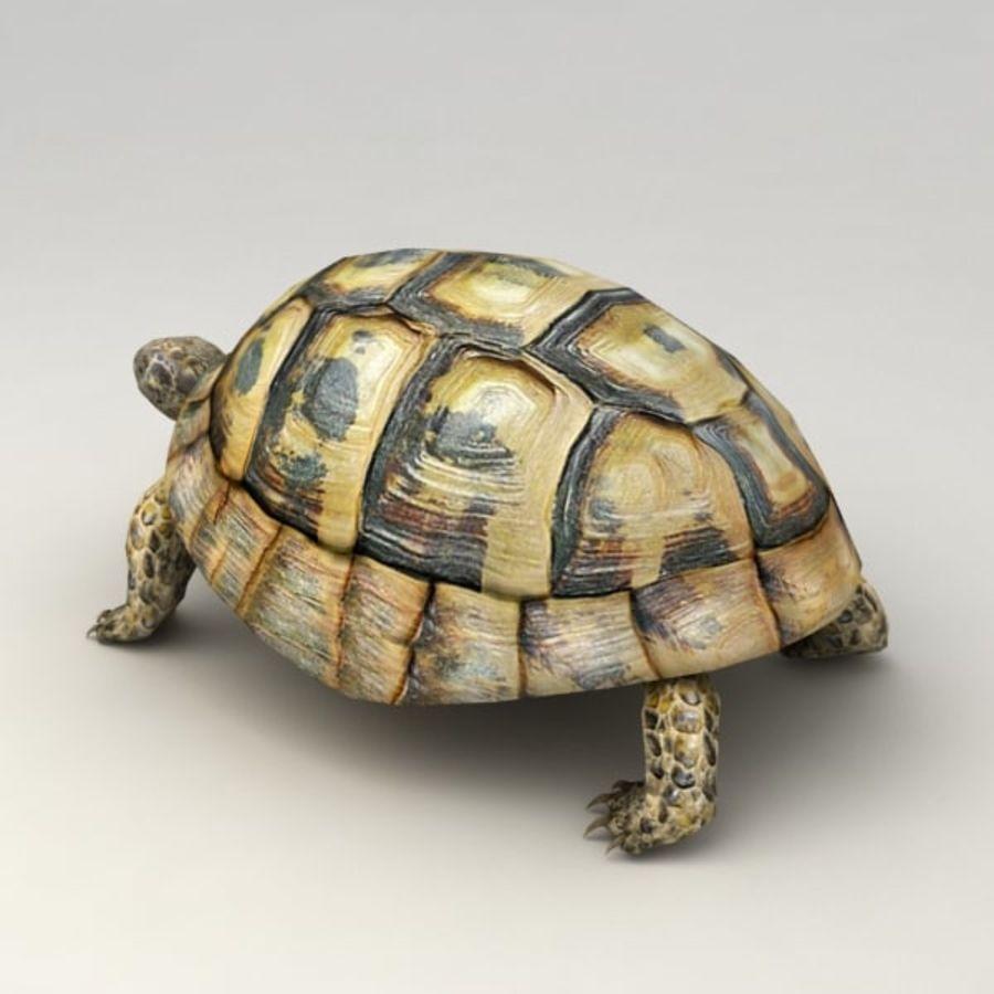 Черепаха сфальсифицирована royalty-free 3d model - Preview no. 3
