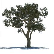 Árvore 3d model