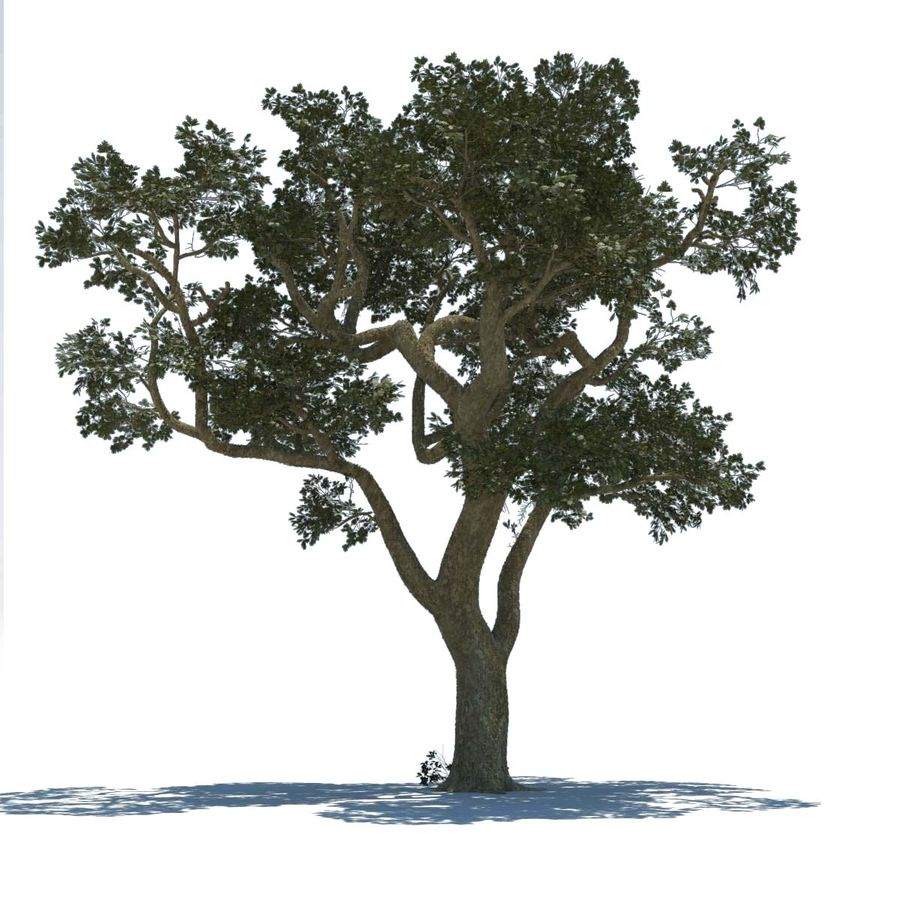 Baum royalty-free 3d model - Preview no. 1