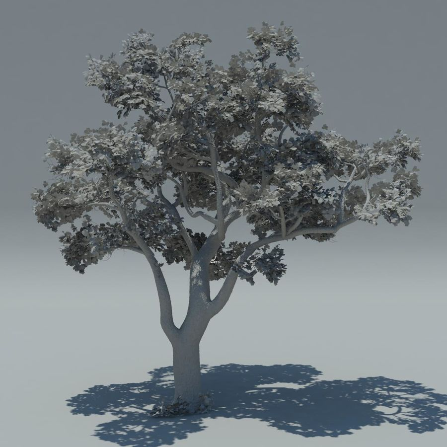 Baum royalty-free 3d model - Preview no. 4