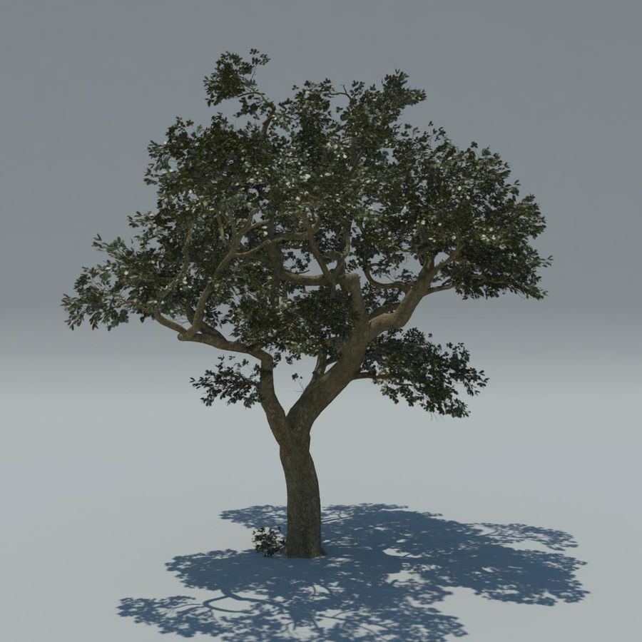 Baum royalty-free 3d model - Preview no. 2