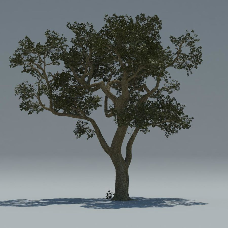Baum royalty-free 3d model - Preview no. 6