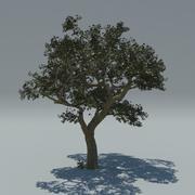 Albero 3d model