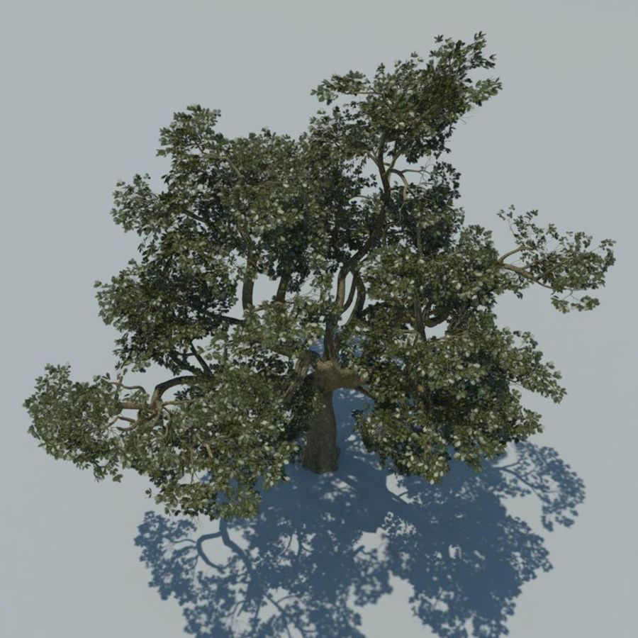 Baum royalty-free 3d model - Preview no. 3