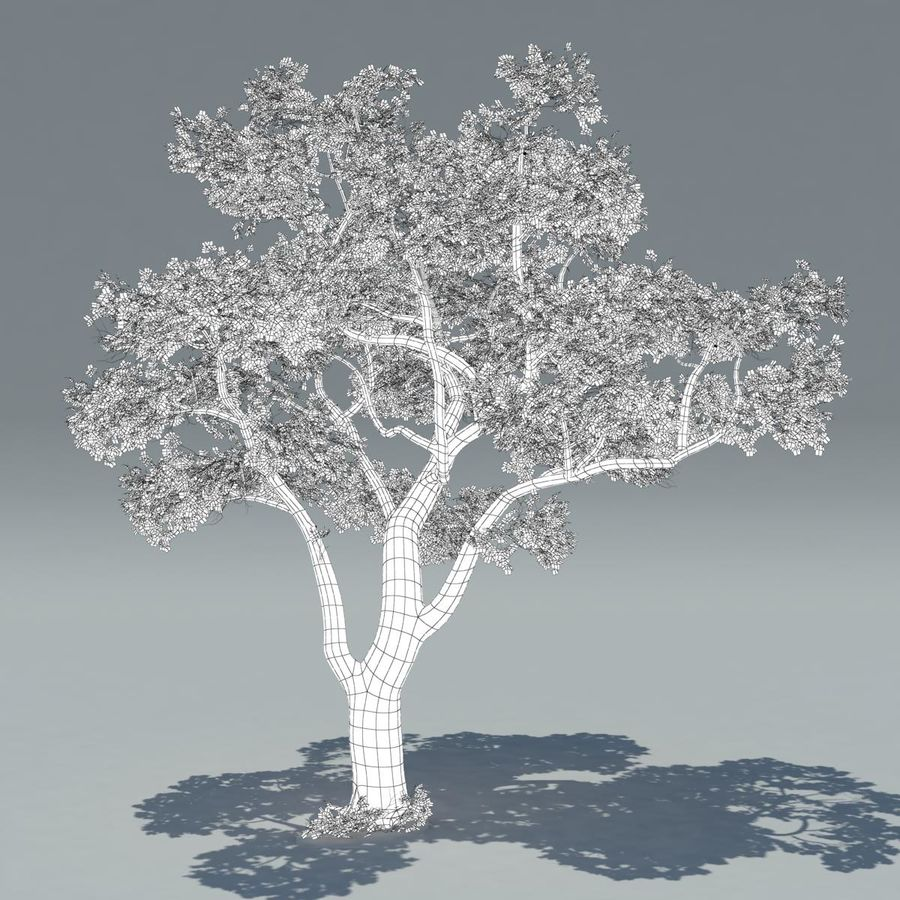 Baum royalty-free 3d model - Preview no. 5