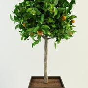 orange tree citrus 3d model