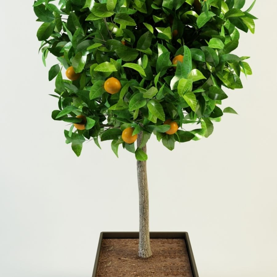orange tree citrus royalty-free 3d model - Preview no. 3