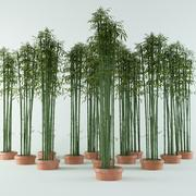 Bamboo bush green 3d model