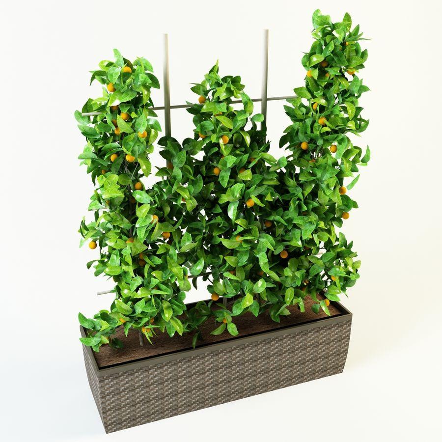 orange citrus royalty-free 3d model - Preview no. 2