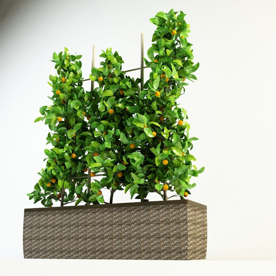 orange citrus royalty-free 3d model - Preview no. 3