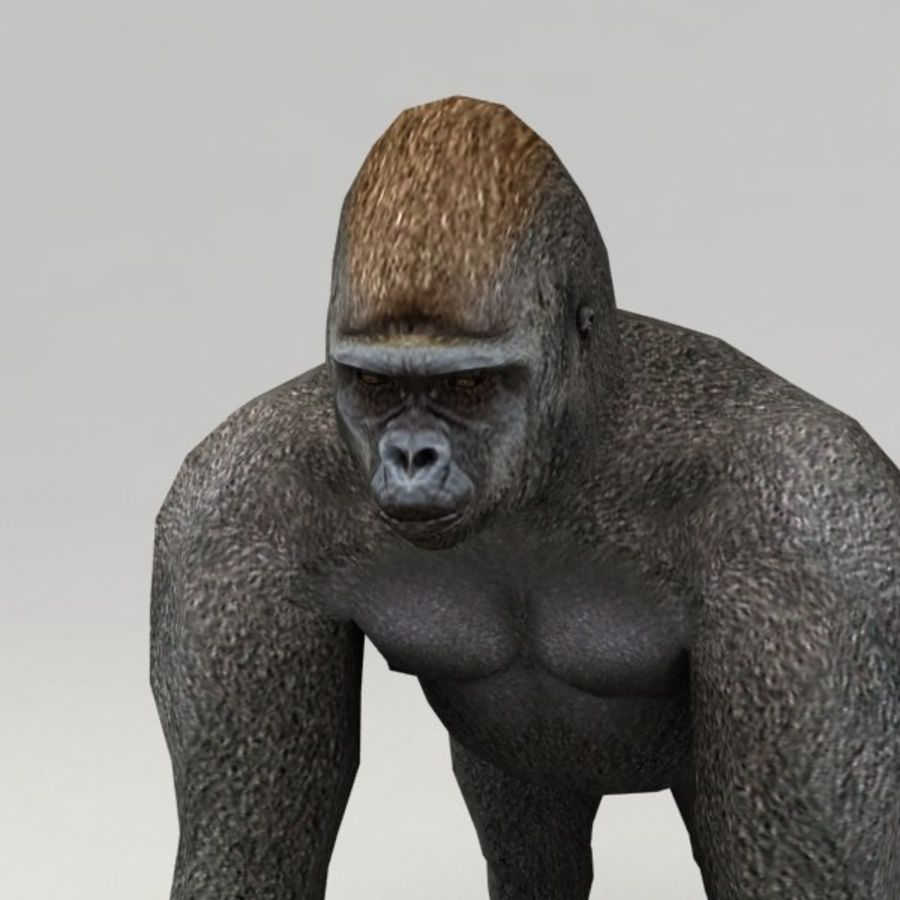 Gorilla rigged royalty-free 3d model - Preview no. 5