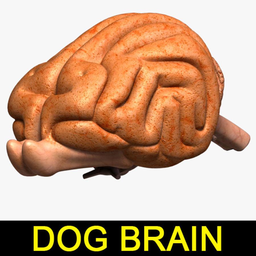 Dog_Brain 3D Model $49 - .max .3ds .obj .lwo - Free3D