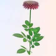 Fleur de dahlia hybride 3d model