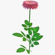 Dahlia Hybrida Flower 3d model