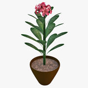 Plumeria Rose Plant 2 3d model