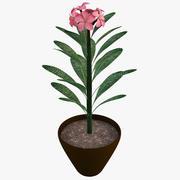 ピンクプルメリア植物 3d model
