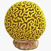 두뇌 산호 2 3d model