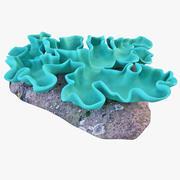 산호 버섯 3d model
