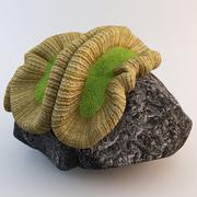 Brain Coral 3 3d model