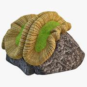 Cerebro coral 3 modelo 3d