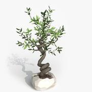 Bonzai Olive 3d model