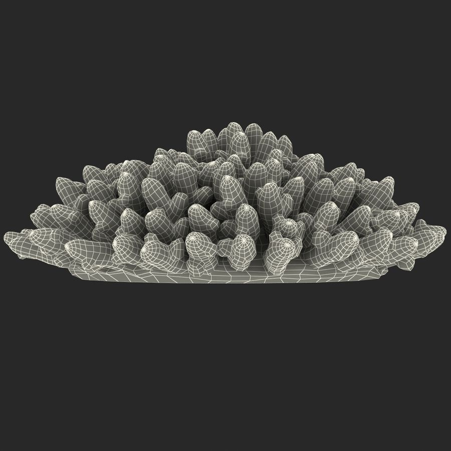 Acropora Coral royalty-free 3d model - Preview no. 11
