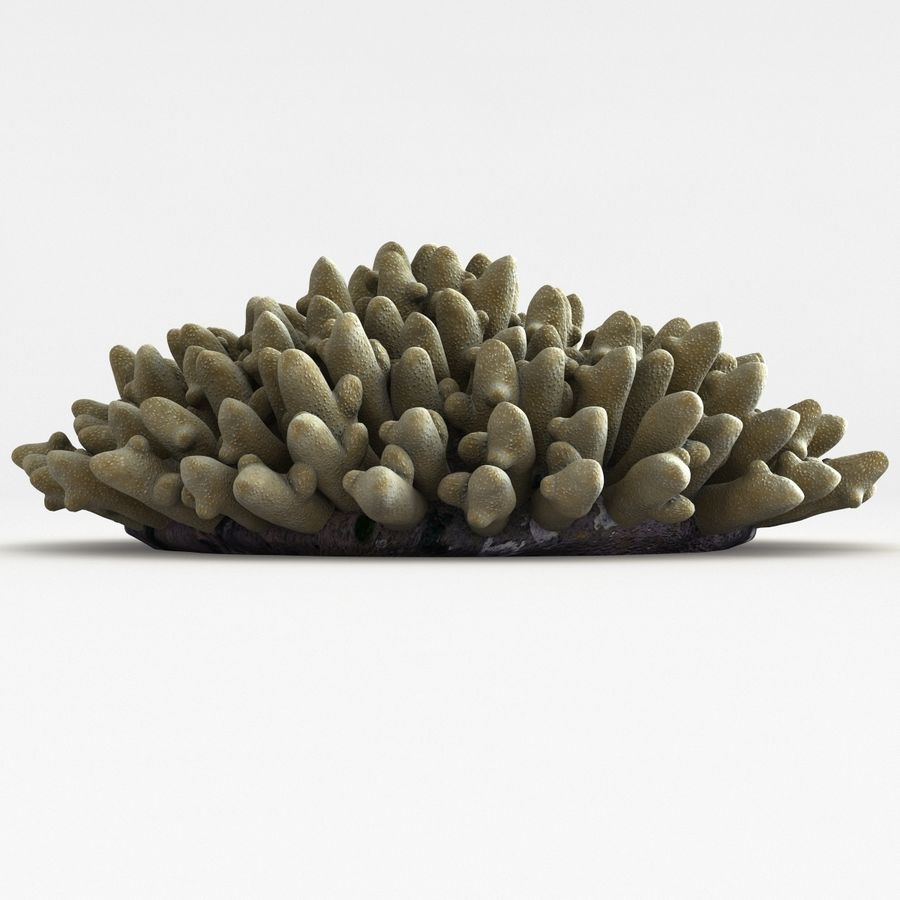 Acropora Coral royalty-free 3d model - Preview no. 6