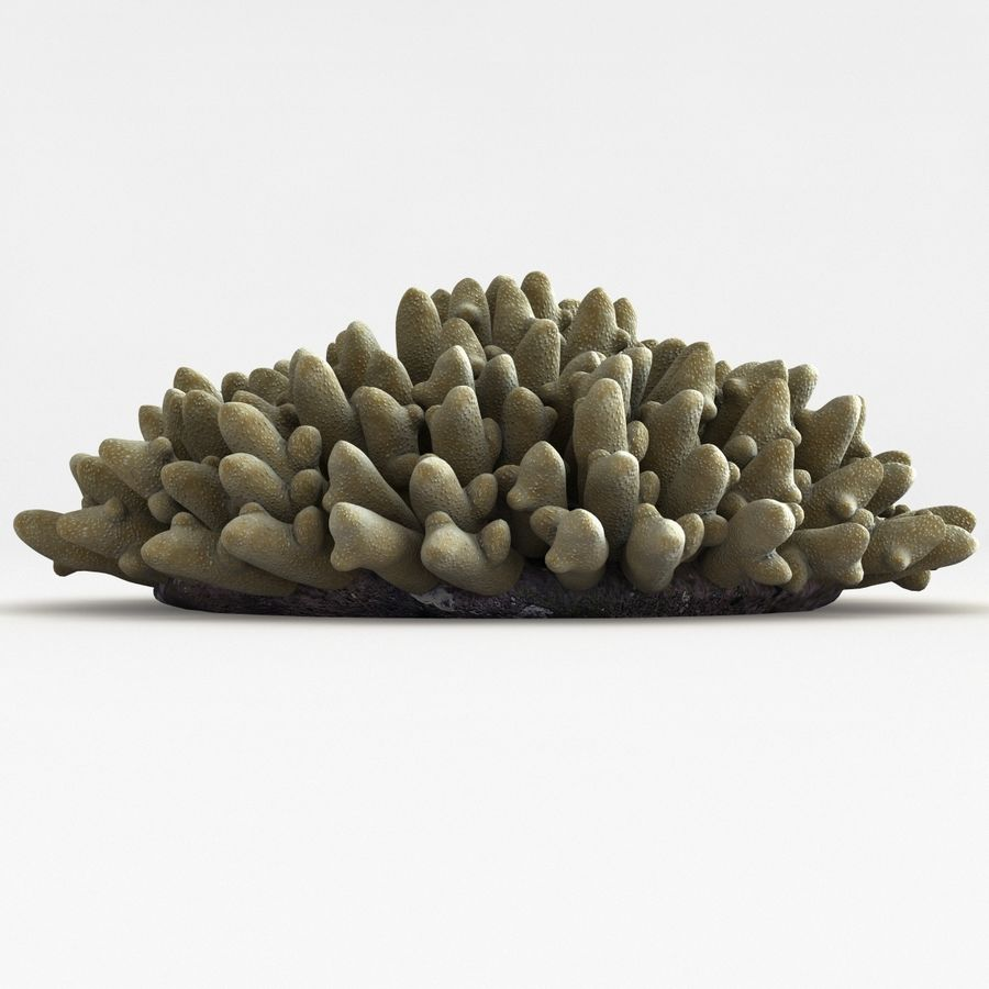 Acropora Coral royalty-free 3d model - Preview no. 5