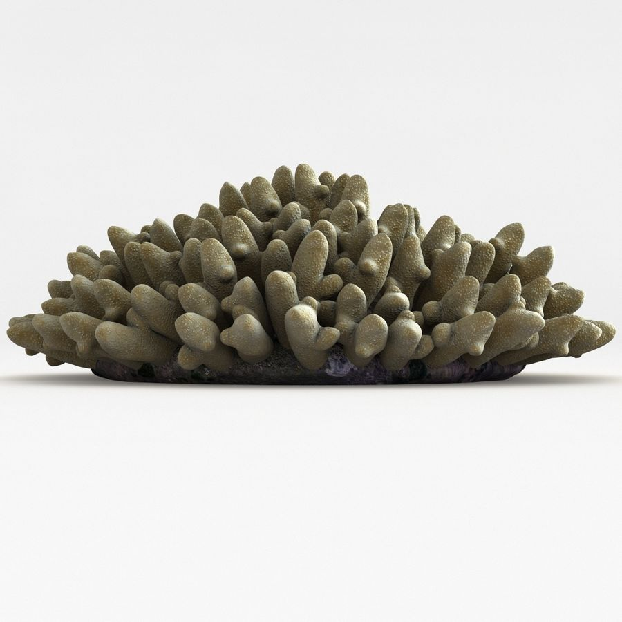 Acropora Coral royalty-free 3d model - Preview no. 7